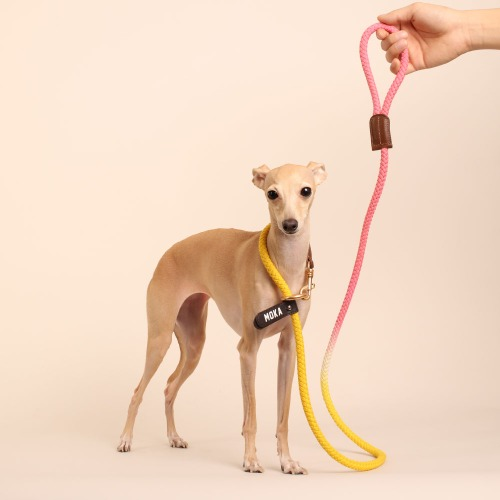 [LIMITED] (TWO TONE) SMART LEASH_YELLOW PINK